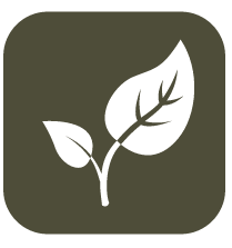 Leaf_Icon_Square